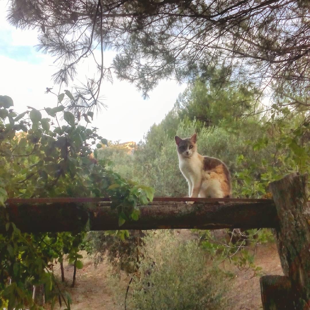 Blancanieves est echando la tarde en el palo tan agustohellip
