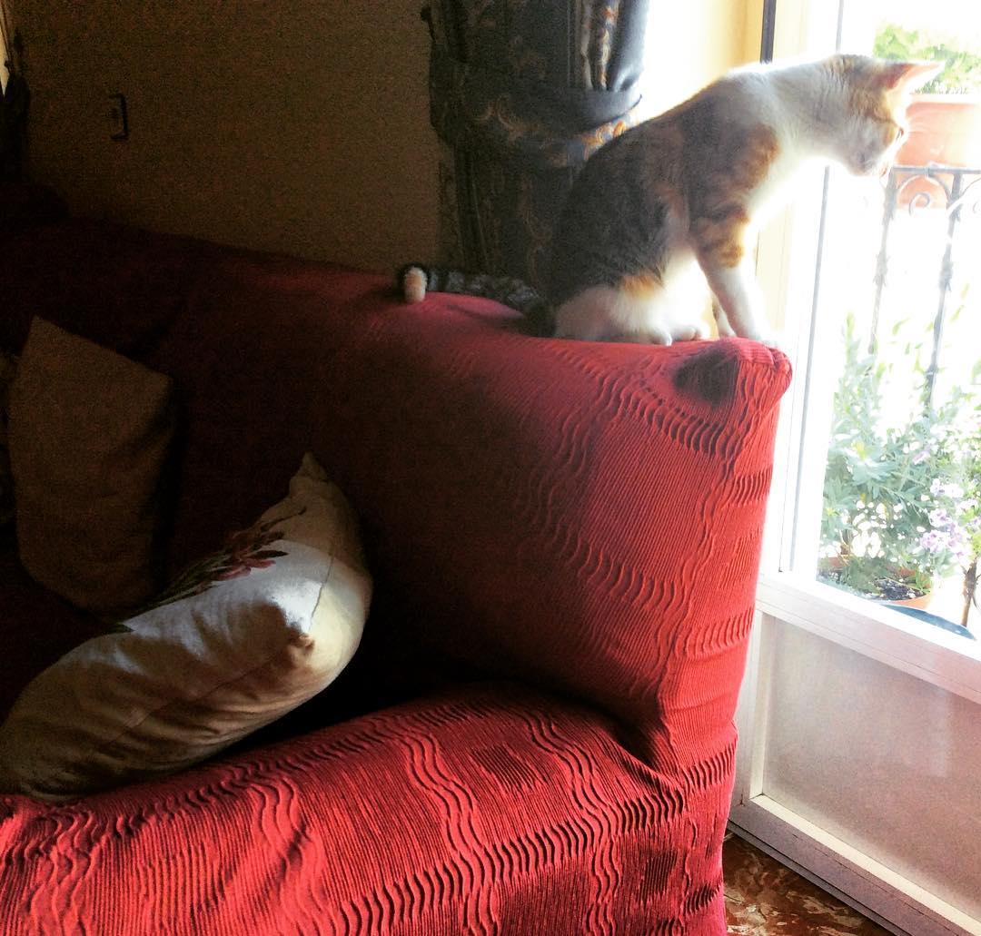 Ella es la duea absoluta del sof si lo vendemoshellip